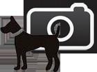 Pet Photo